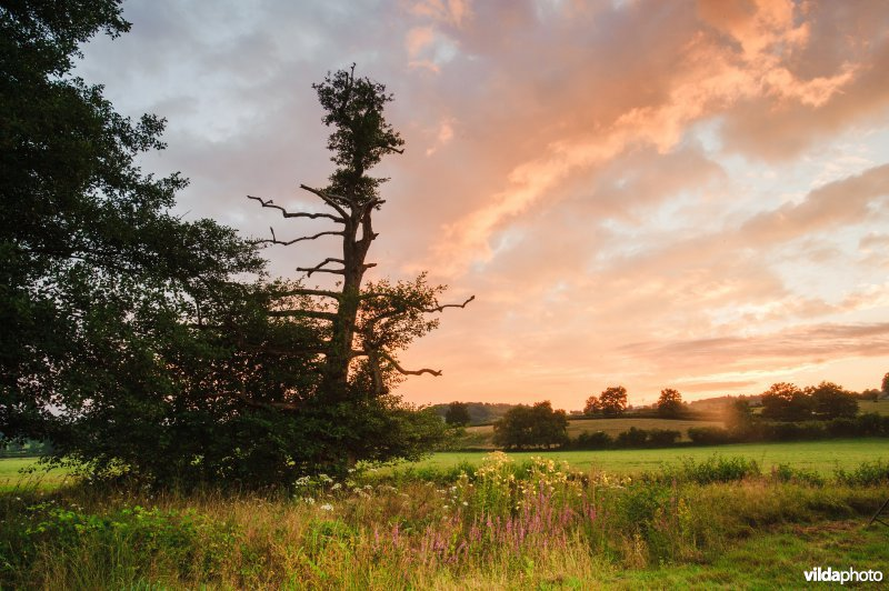 Landschap in de Morvan, Frankrijk
